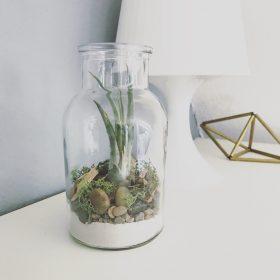 Terrarium small