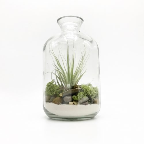 Terrarium Bottle M